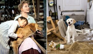The 10 Best Dog Movies Ever Made