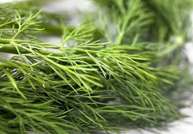 Dill, 9 Staple Herbs and Spices