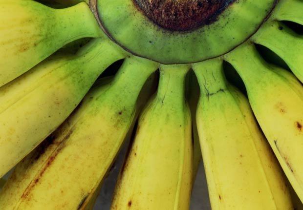 Plátano en el vástago, 10 recetas de plátano Esenciales