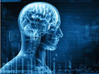 Rayos X de un hombre - Efectos del estrés sobre la memoria
