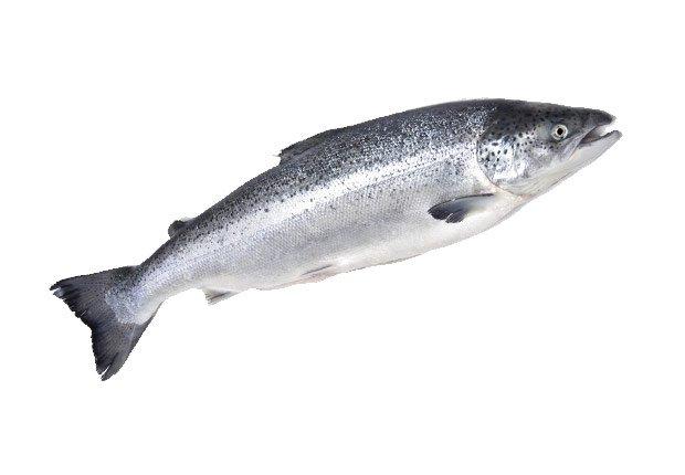 Pescado graso - alimentos para prevenir el cancer.