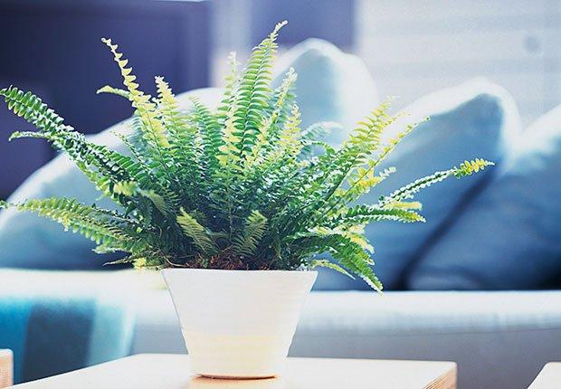 Planta en un tiesto - Regalos buenos para la salud