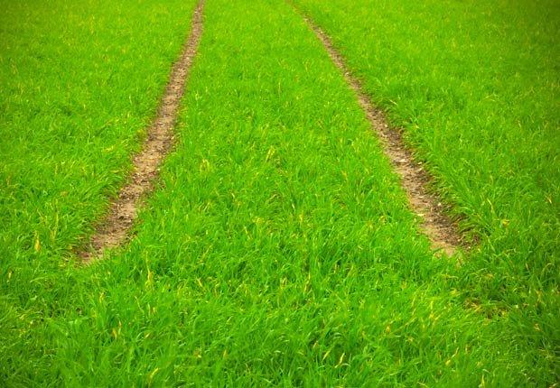 Pistas en la hierba, 7 maneras de salir de su zona de confort