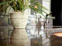 Granito en la cocina con fregadero y una planta. Mejoras en la cocina.