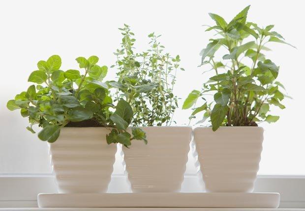 Plantas en la casa - Prepare su casa para el invierno