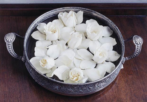 Flores con significado para decorar en ocasiones especiales - Gardenias