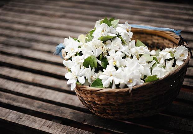 Flores con significado para decorar en ocasiones especiales - Jazmín