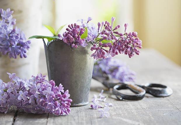 Flores con significado para decorar en ocasiones especiales - Lilas