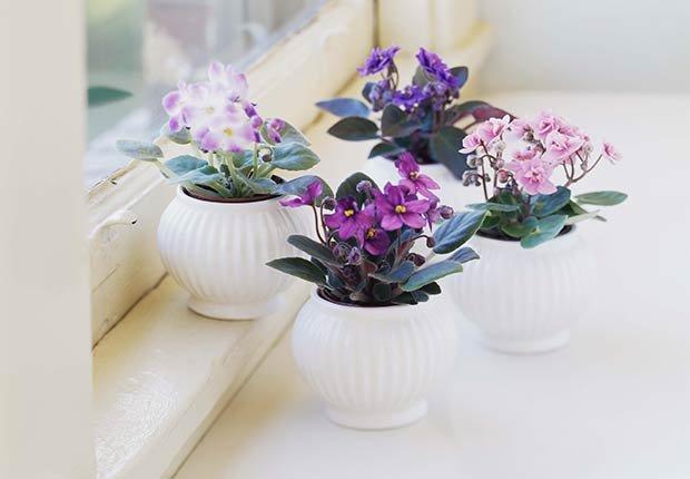 Flores con significado para decorar en ocasiones especiales - Violetas