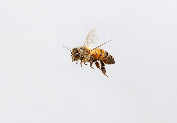 Tácticas para deshacerse de los insectos - Abejas