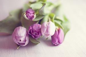 Ramo de tulipanes morados - Flores para mamá