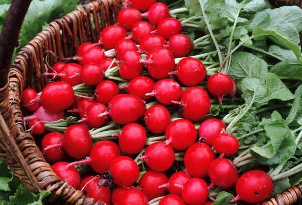 Rábanos rojos, 10 Hierbas y verduras más fáciles de plantar en su jardín