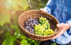 Frutas que puedes cultivar orgánicamente en tu jardín