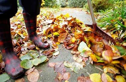 Mantener su jardin en el otoño