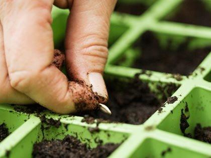 Hombre plantando una semilla