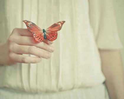 Es tiempo de mariposas