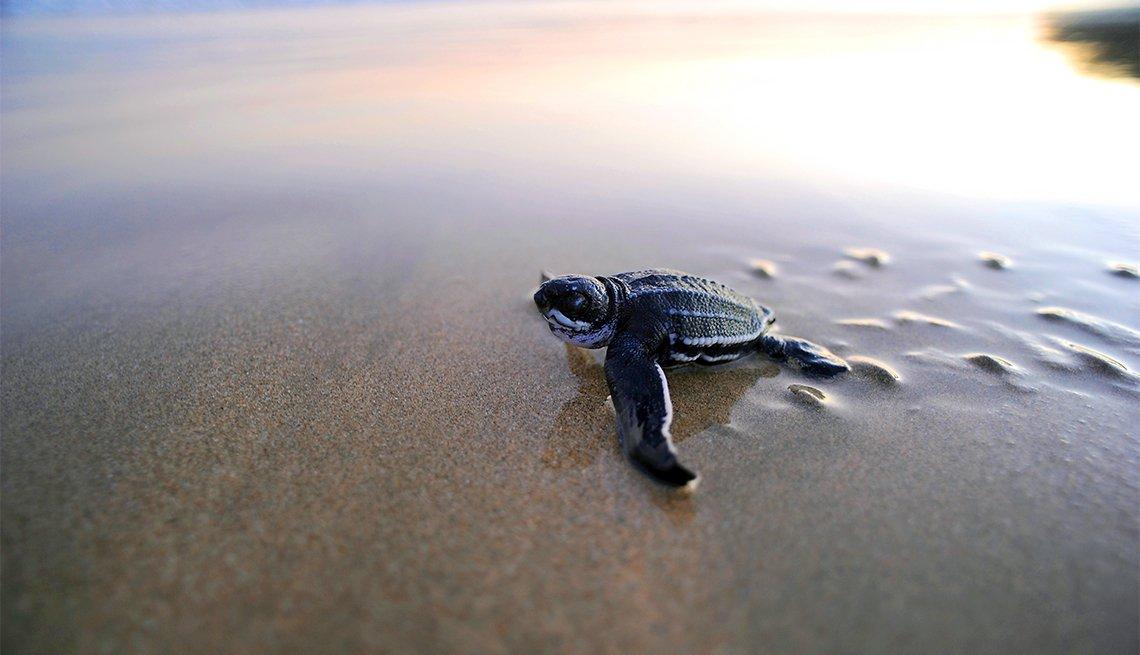 Help with sea turtle conservation in Tortuguero, Costa Rica