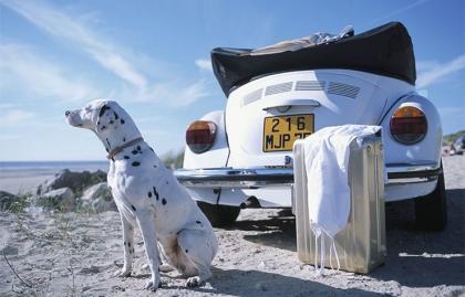Cómo viajar con tu mascota - Perro sentado junto a un carro