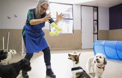Una mujer mayor jugando con perros en un centro de mascotas - Herramientas para encontrar el trabajo de tus sueños.