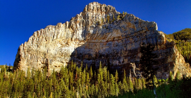 Mount Charleston in Humboldt-Toiyabe National Forest is just 40 miles from Vegas