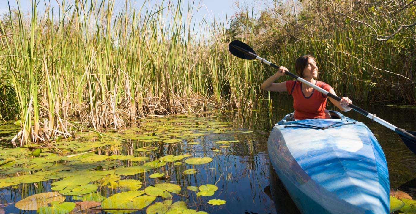 Paddle a Mangrove Maze