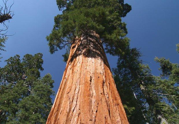 Parque nacional Sequoia & Kings Canyon en California - 10 mejores parques nacionales para visitar en el verano