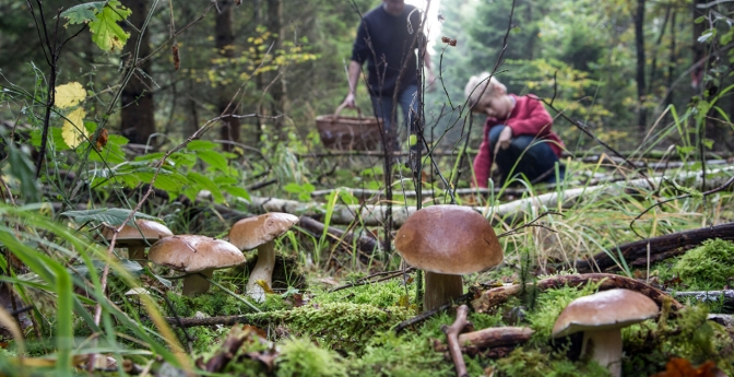 Forage for Wild Mushrooms in British Columbia