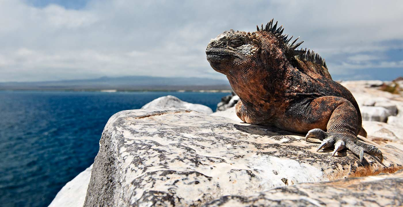 Marine Iguana sitting on a rock in the Galapagos Islands, Ecuador, 10 Great All-Inclusive Vacations