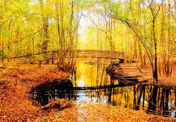 Congaree National Park - Parques que pasan desapercibidos en EE.UU.