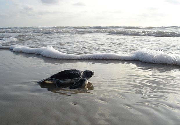 Playas recónditas en Estados Unidos - Tortuga en la playa