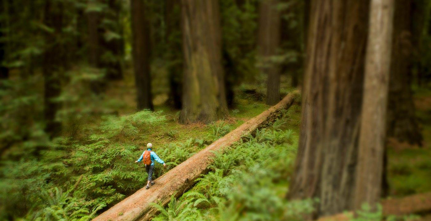 Redwood Coast, California