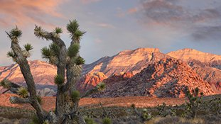 Viva Las Vegas and Nature Nearby