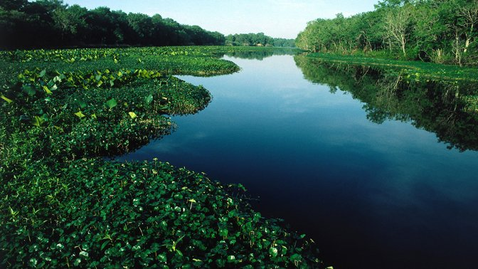 Great Rivers of Florida