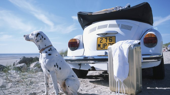 Give your pet exercise breaks, if you are traveling long distance in a car.
