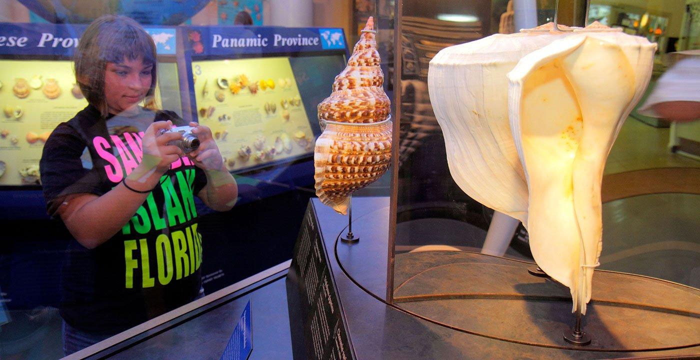 See Seashells From Around the World