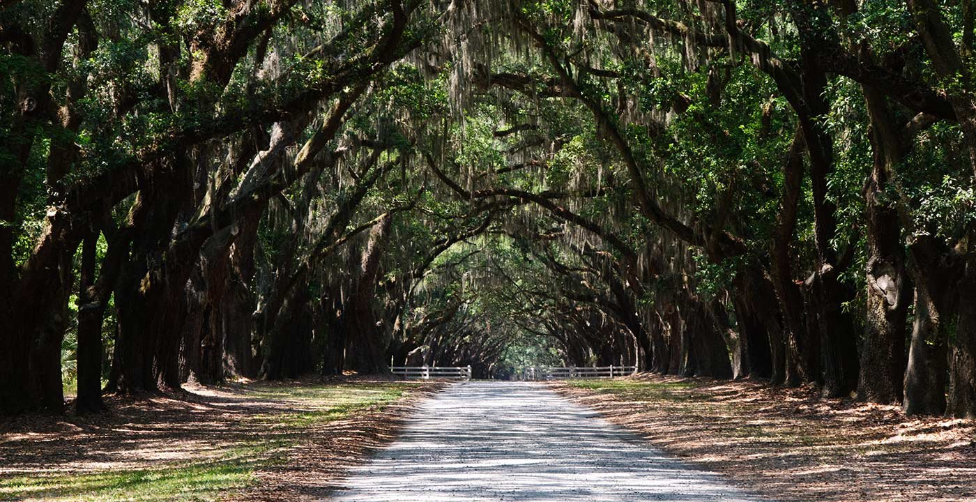 Commune With Nature at Skidaway Island State Park