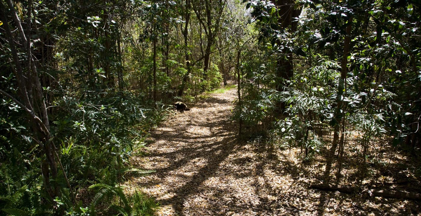 Walk Kipuka Puaulu for Beautiful Native Forest