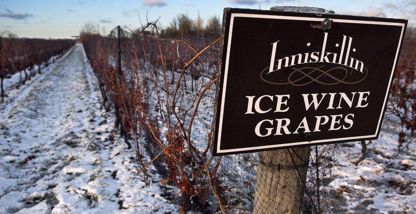 Sample Ice Wine
