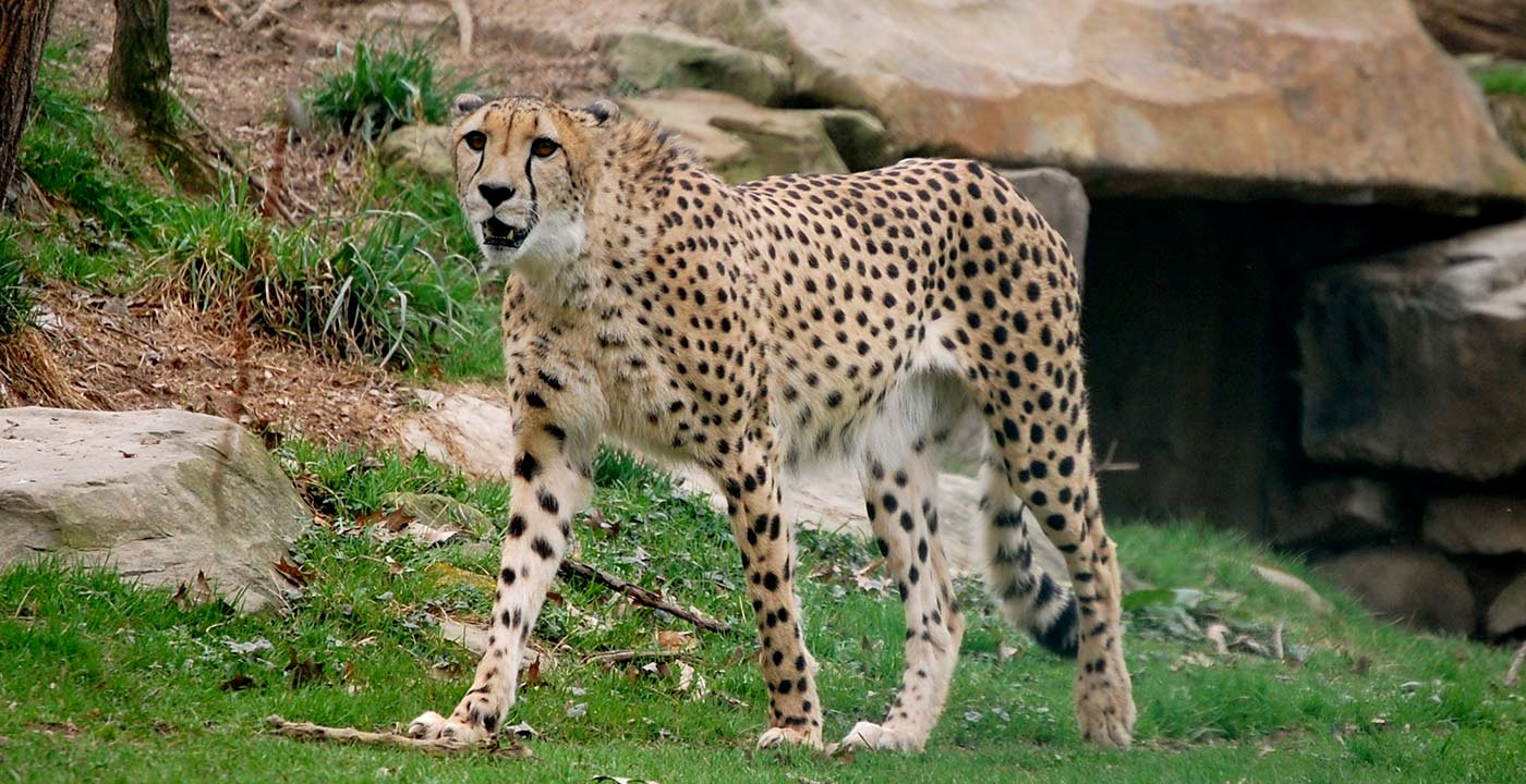 Talk to the Animals at the Metroparks Zoo