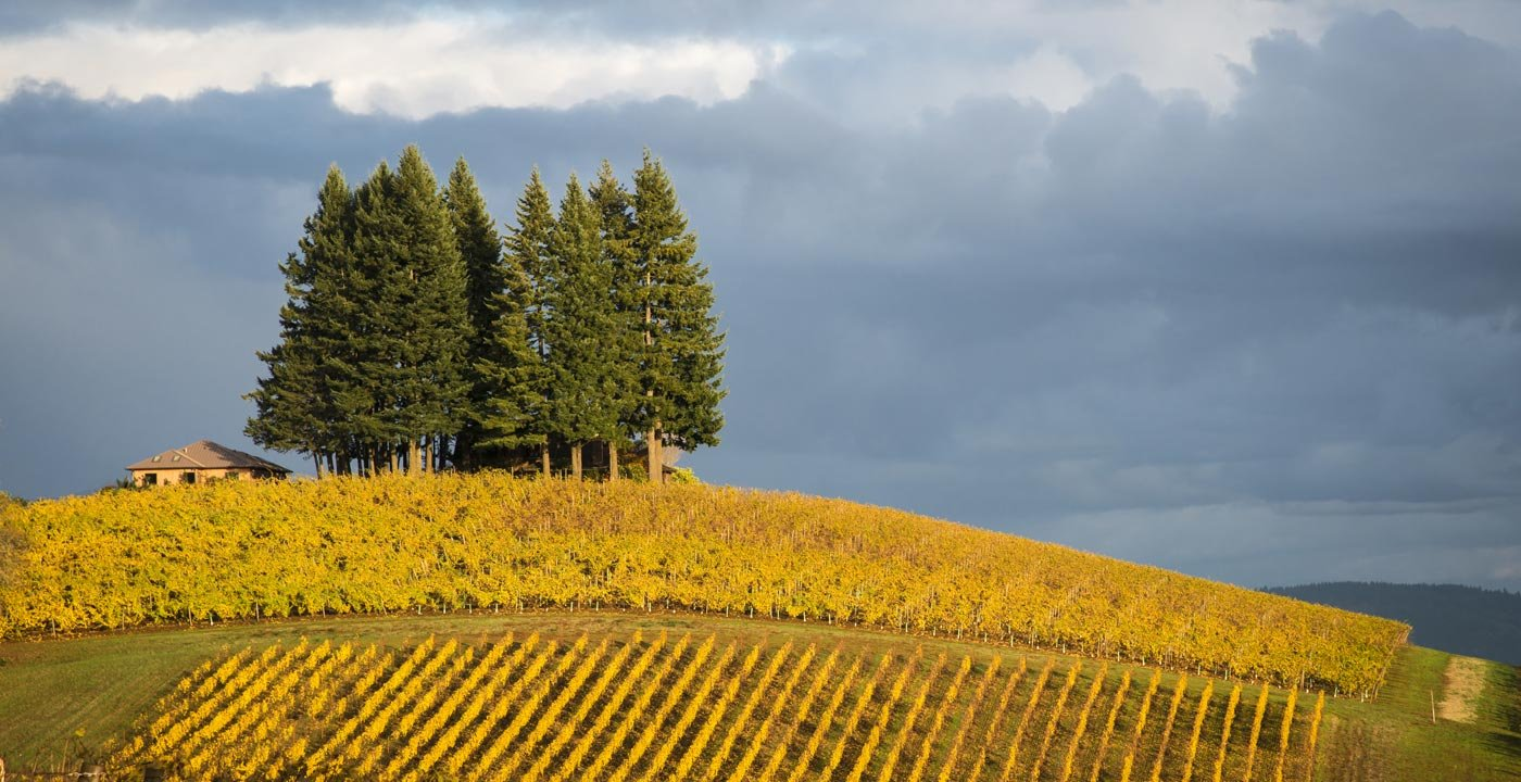 A Wine-Country Tour Is Always in Good Taste