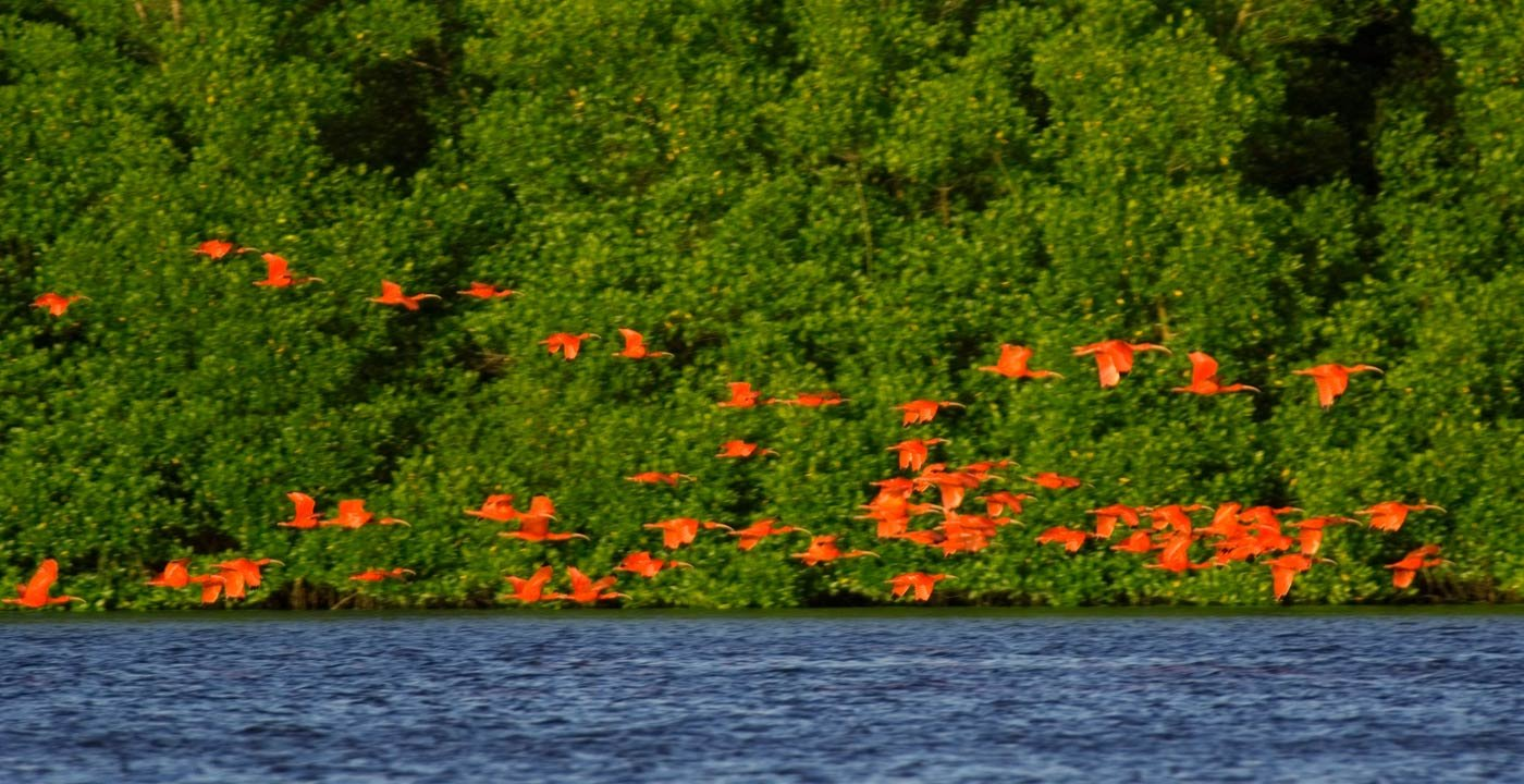 Wildlife Abounds at Caroni Bird Sanctuary