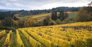 The Willamette Valley and Wine Country, OR